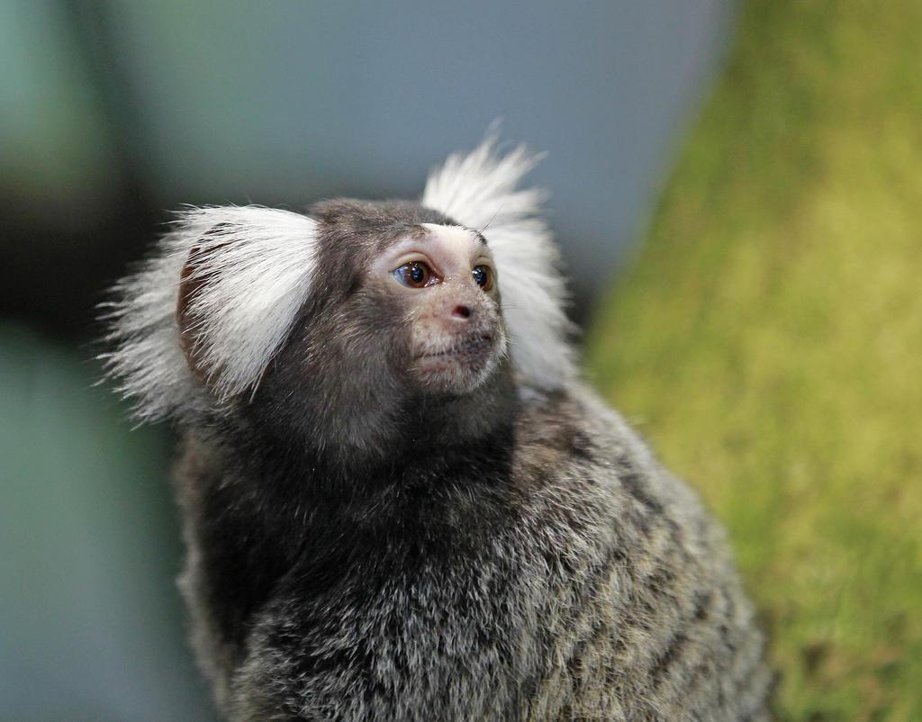 Fåglar o djur i hägn exvs djurpark