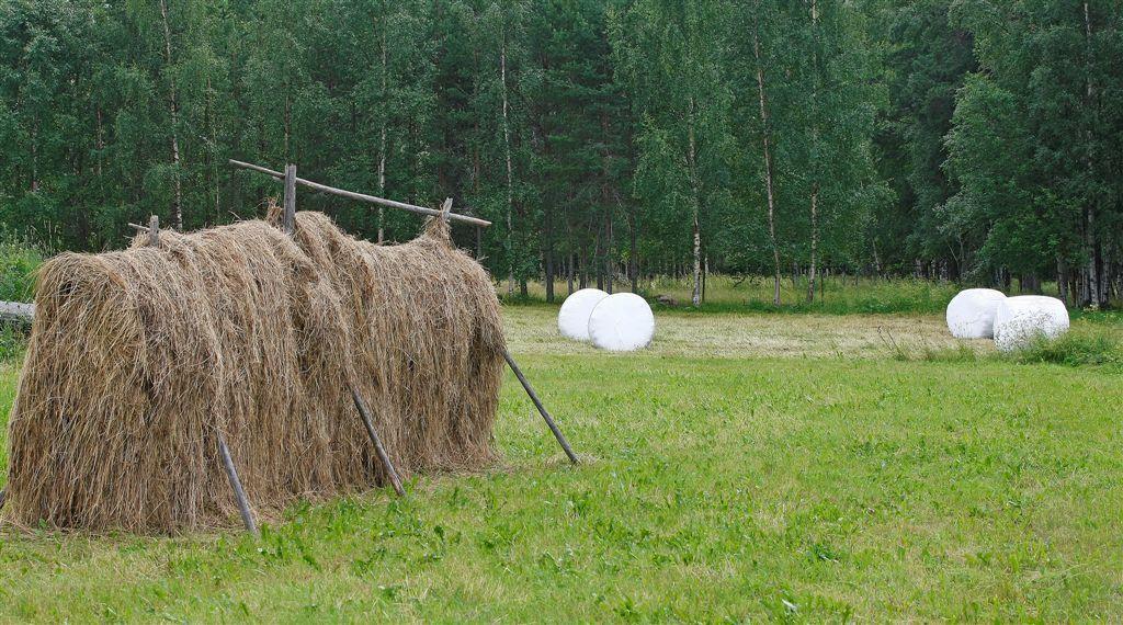 Äldre lantbruk+ höhässjor