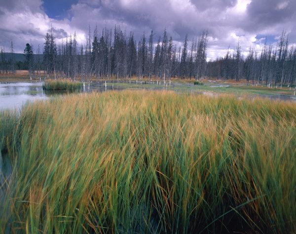 Vattenväxter i skogstjärn.