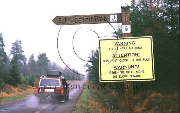 Varningsskylt i älgtätt område