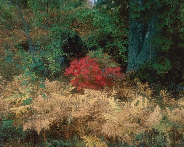Höstfärger i skogen.( Bilden är softad.)