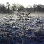frost20092.jpg