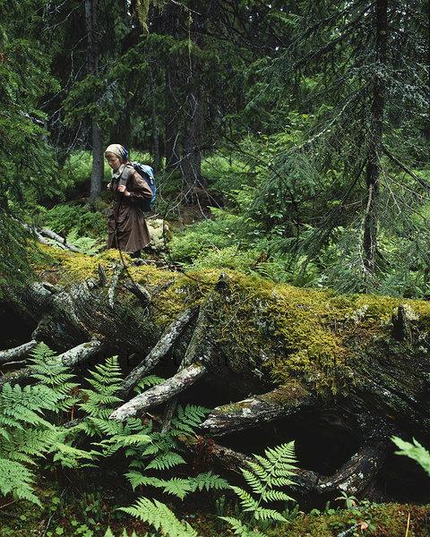 Gammal skog