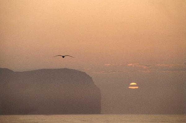 Fågel, berg och solnedgång.
