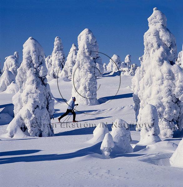 Snölandskap