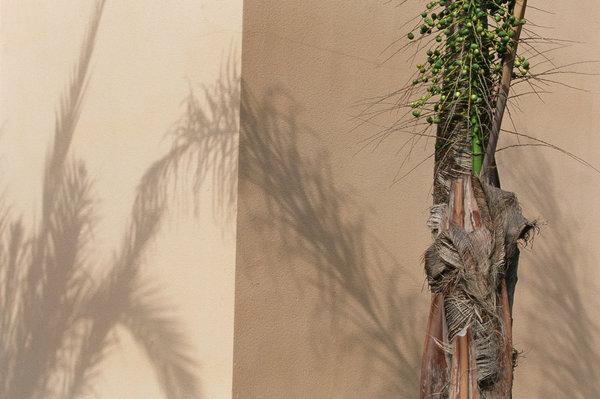 Palmstam och skuggor.