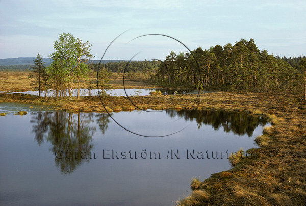 Myrgöl i Värmland.