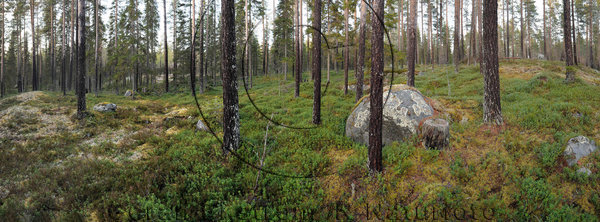 Skog på senhösten