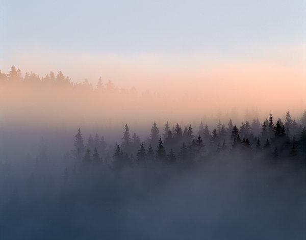 Morgondimma i skogen.