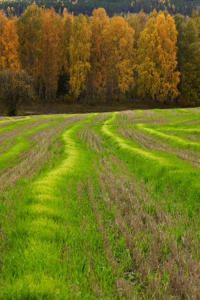 Jordbrukslandskap.