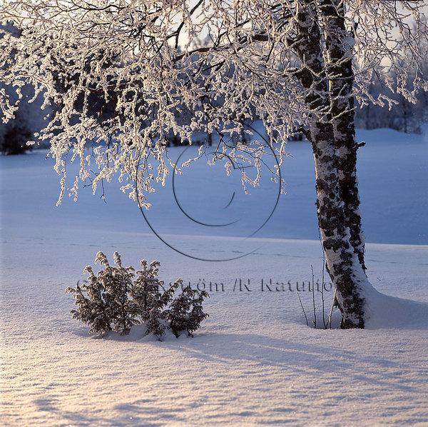 Vinterlandskap med frost