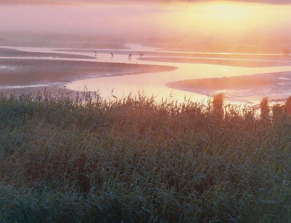 Grå häger (Ardena cinerea) i landskapet.