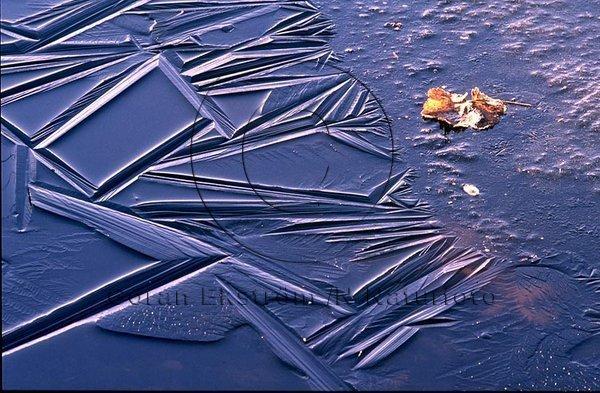 Ny-is på vattenpöl