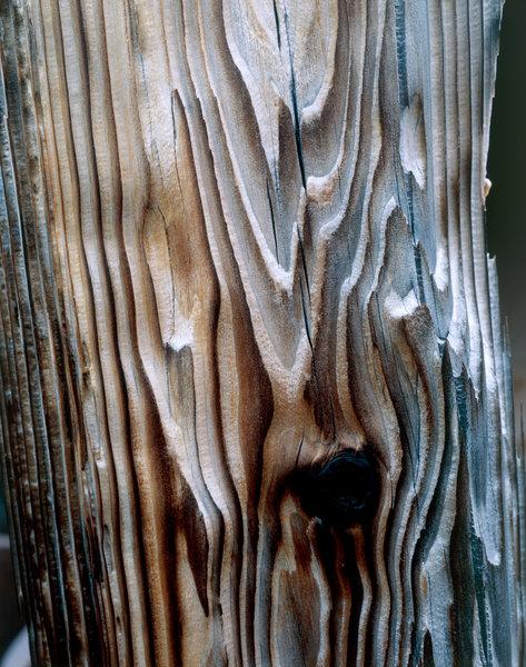 Trädformationer och ådringar.