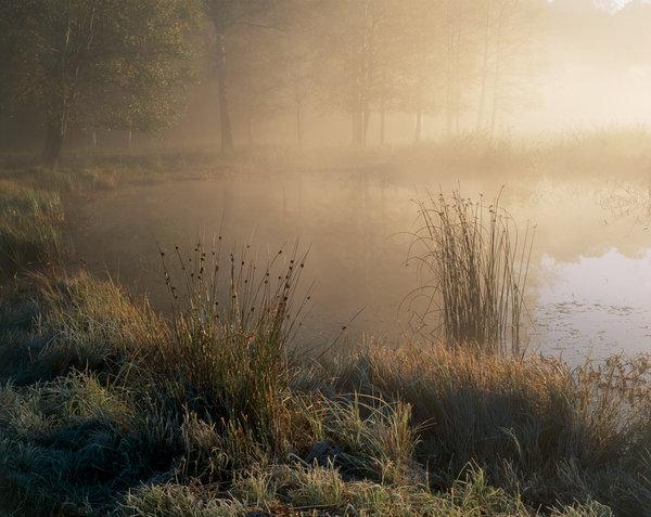 Våtmark i dimma..