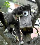 katt23.jpg