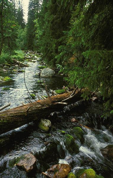 Skogsbäck