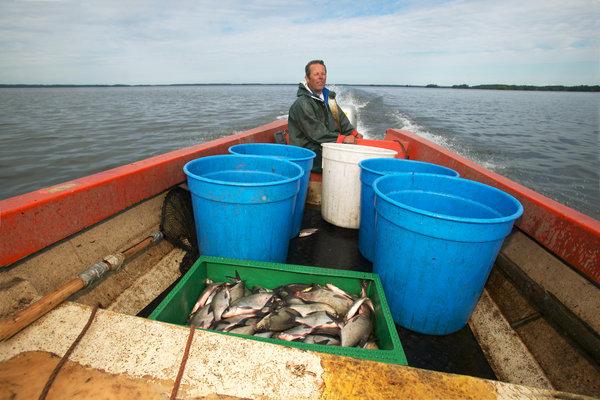 Yrkesfiskare med fångst.