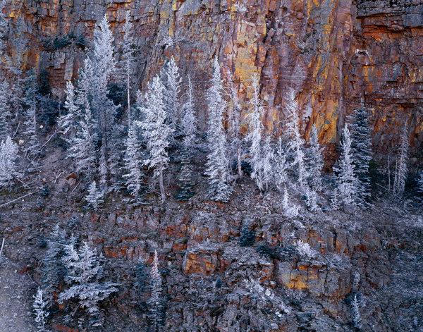 Granar i frost.