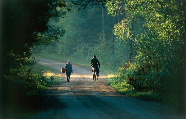 Människor går och cyklar på grusväg i skogen.