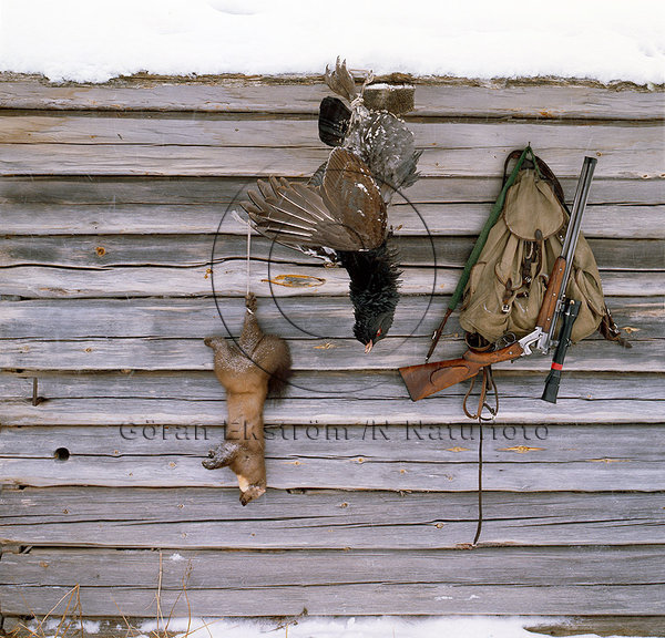 Jaktbyte tjäder och mård