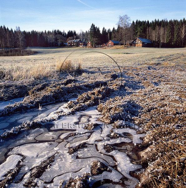 Frost i vattensamling på hösten