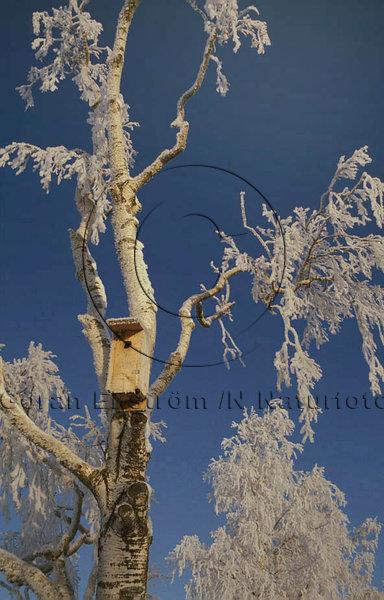 Frostig fågelholk