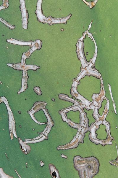 Siffror på kaktusblad.