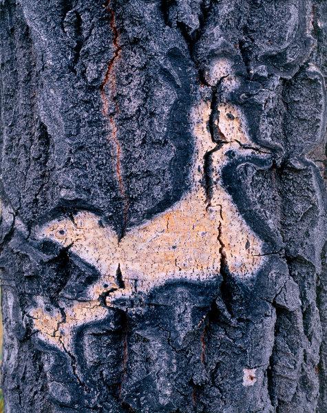 Trädformationer på asp.