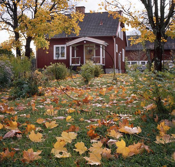 Höst-trädgård