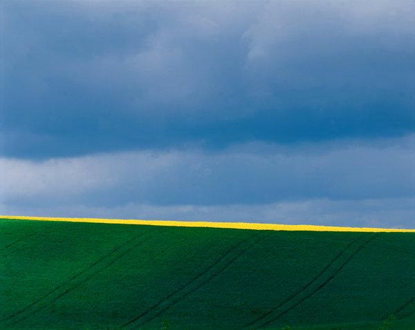 Rapsfält i jordbrukslandskap.