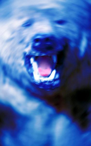 Björn, Ursus arctos.