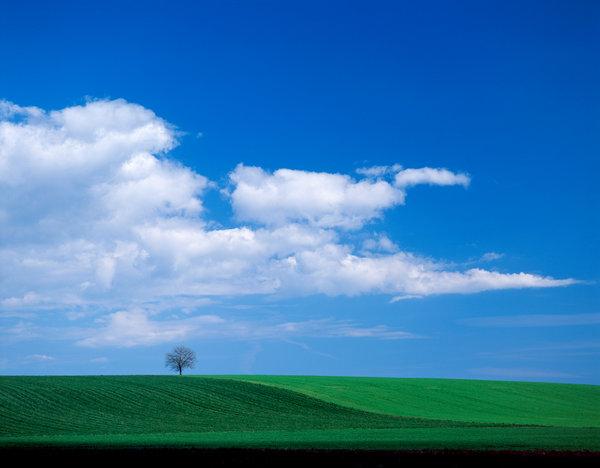Träd i jordbrukslandskap.