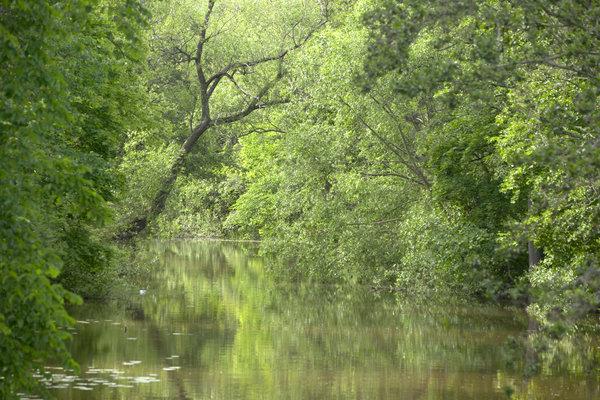 Grönska vid ån.