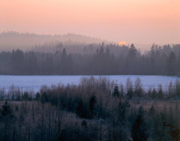 Solnedgång i skogslandskap.