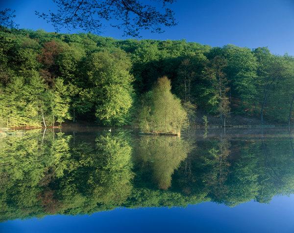 Bokskog speglar sig i sjön.