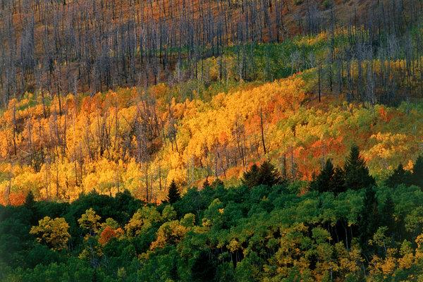 Höstfärger i skogslandskap.