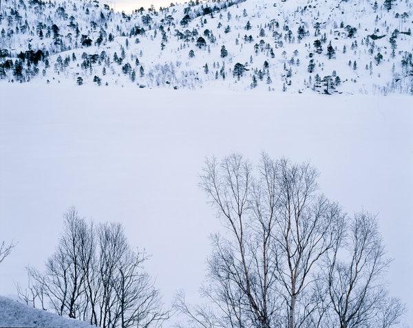 Träd i vinterlandskap.