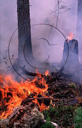 Anlagd skogsbrand i naturvårdssyfte