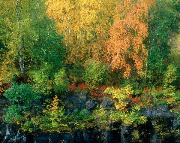Höstfärger i skogen, bilden är softad.