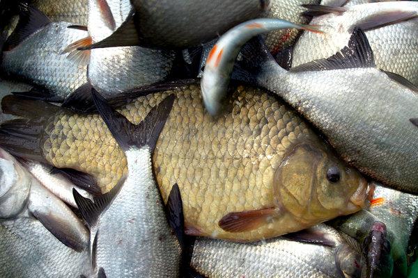 Fisk.