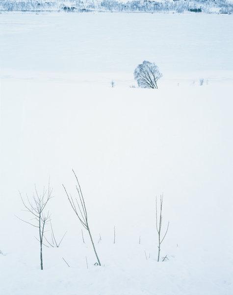 Lutande träd och vinterståndare i vinterlandskapet.