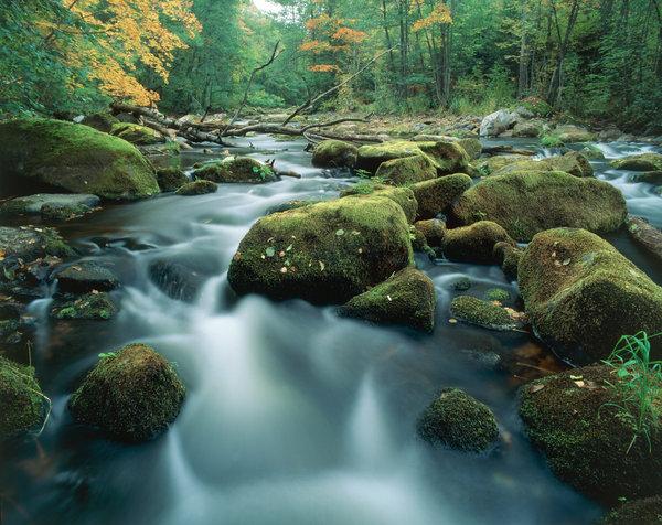 Mossiga stenar i ån.