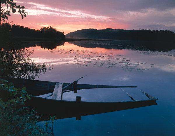 Vattenfylld eka i solnedgång.