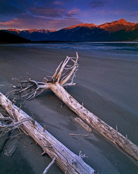 Döda träd på sandbank.