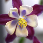 blomma20121.jpg
