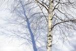 vinterträd2011.jpg