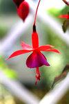 blomma20091.jpg